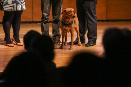 Ama, el perro guía de Javier Aguilar